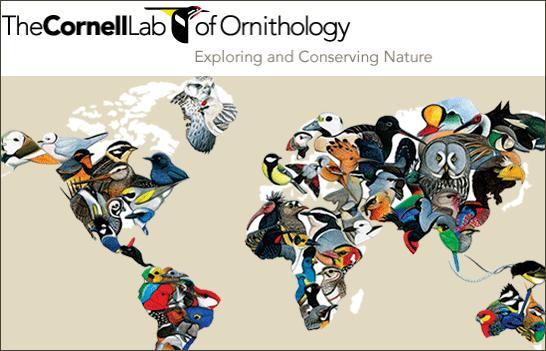 Cornell Lab Global Big Day 2015 bird map